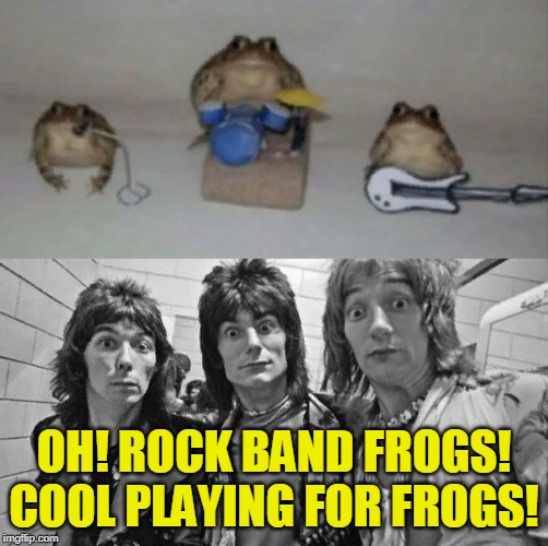 Rock and roll FROGS! | OH! ROCK BAND FROGS! COOL PLAYING FOR FROGS! | image tagged in funny,frog,frogs,rock and roll,playing,music | made w/ Imgflip meme maker