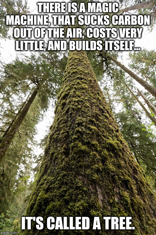 It's called a tree |  THERE IS A MAGIC MACHINE, THAT SUCKS CARBON OUT OF THE AIR, COSTS VERY LITTLE, AND BUILDS ITSELF... IT'S CALLED A TREE. | image tagged in old growth,climate change,british columbia,forestry,logging,deforestation | made w/ Imgflip meme maker
