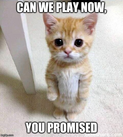 Cute Cat Meme | CAN WE PLAY NOW, YOU PROMISED | image tagged in memes,cute cat | made w/ Imgflip meme maker