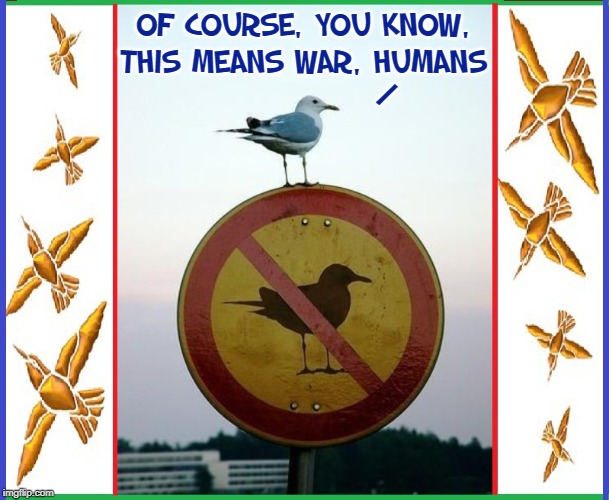 ...I WILL find your car and I WILL crap on it | OF COURSE, YOU KNOW, THIS MEANS WAR, HUMANS / | image tagged in vince vance,seagulls,birds,warning sign,spiteful seagull,angry birds | made w/ Imgflip meme maker