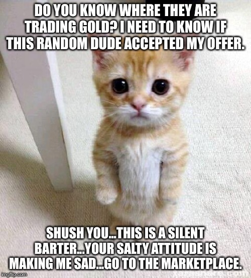 Cute Cat |  DO YOU KNOW WHERE THEY ARE TRADING GOLD? I NEED TO KNOW IF THIS RANDOM DUDE ACCEPTED MY OFFER. SHUSH YOU...THIS IS A SILENT BARTER...YOUR SALTY ATTITUDE IS MAKING ME SAD...GO TO THE MARKETPLACE. | image tagged in memes,cute cat | made w/ Imgflip meme maker