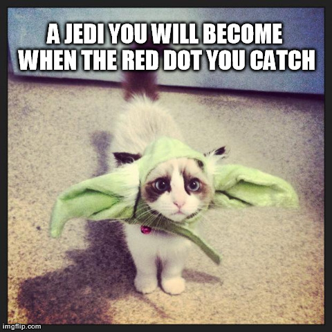 Yoda Cat | A JEDI YOU WILL BECOME WHEN THE RED DOT YOU CATCH | image tagged in cats,kitten,yoda,star wars,cute,funny | made w/ Imgflip meme maker