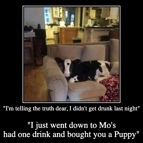 This is one RayDog should have posted, 'Never buy a Puppy when you're drunk..."