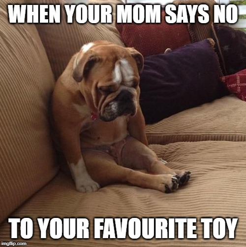 bulldogsad |  WHEN YOUR MOM SAYS NO; TO YOUR FAVOURITE TOY | image tagged in bulldogsad | made w/ Imgflip meme maker