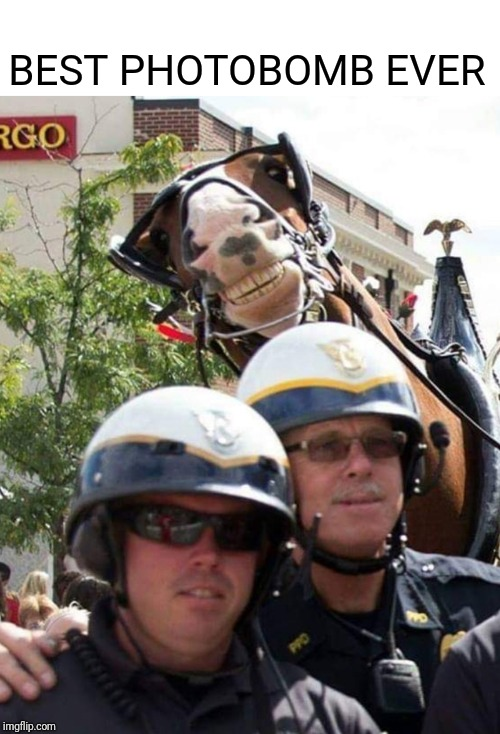 Horsing Around | BEST PHOTOBOMB EVER | image tagged in horse,photobombs | made w/ Imgflip meme maker