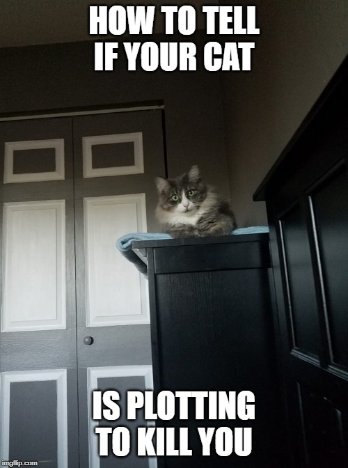 intense cat | HOW TO TELL IF YOUR CAT IS PLOTTING TO KILL YOU | image tagged in intense cat,killer cat,plotting cat | made w/ Imgflip meme maker