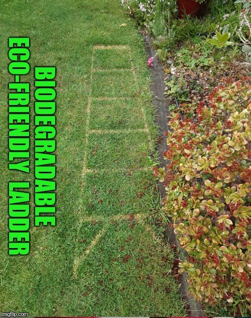 Biodegradable Eco-friendly Ladder | BIODEGRADABLE ECO-FRIENDLY  LADDER | image tagged in greta thunberg how dare you,green,grass,drugs,lazy,mowing | made w/ Imgflip meme maker