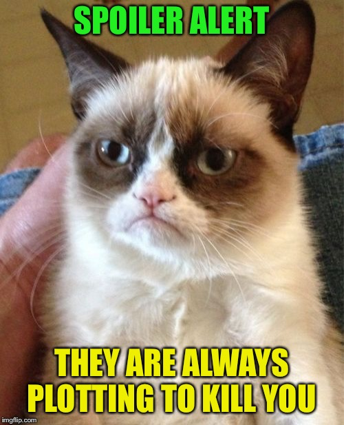 Grumpy Cat Meme | SPOILER ALERT THEY ARE ALWAYS PLOTTING TO KILL YOU | image tagged in memes,grumpy cat | made w/ Imgflip meme maker