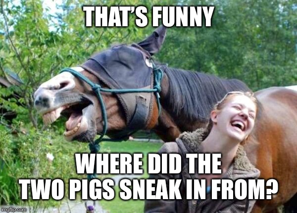 Laughing Horse | THAT'S FUNNY WHERE DID THE TWO PIGS SNEAK IN FROM? | image tagged in laughing horse | made w/ Imgflip meme maker