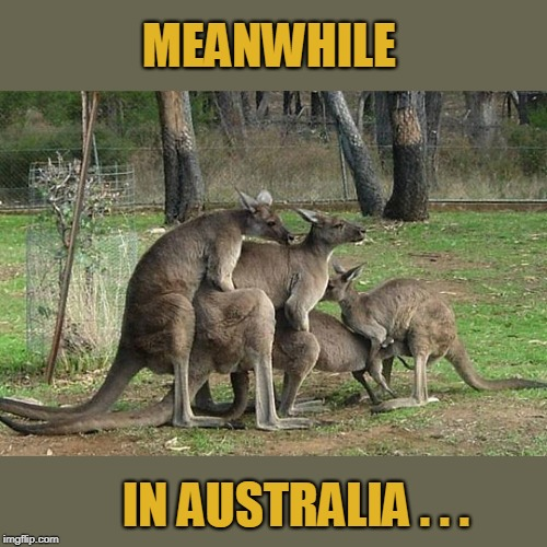 In Australia |  MEANWHILE; IN AUSTRALIA . . . | image tagged in in australia,meanwhile in australia,kangaroo,kangaroos,australia,memes | made w/ Imgflip meme maker