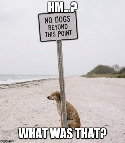 Hm? ... I Didn't hear you. | HM...? WHAT WAS THAT? | image tagged in dogs | made w/ Imgflip meme maker