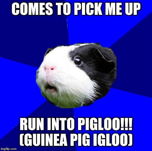 ScumBag GuineaPig | COMES TO PICK ME UP RUN INTO PIGLOO!!! (GUINEA PIG IGLOO) | image tagged in guinea pig,scumbag | made w/ Imgflip meme maker