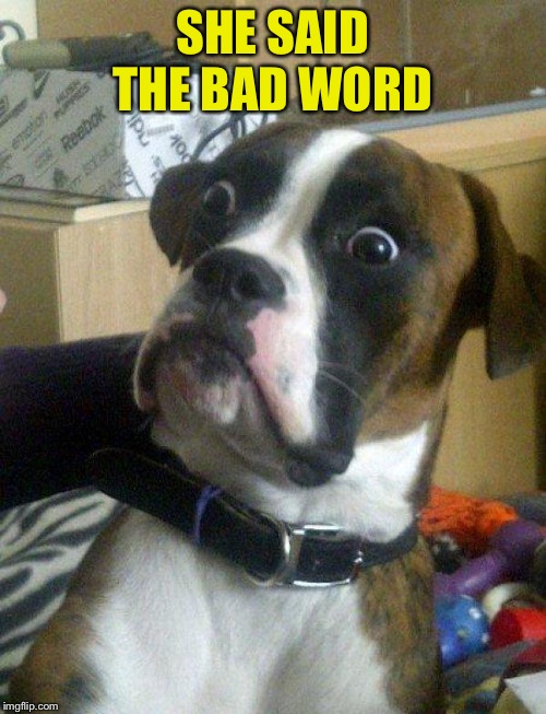 Blankie the Shocked Dog | SHE SAID THE BAD WORD | image tagged in blankie the shocked dog | made w/ Imgflip meme maker
