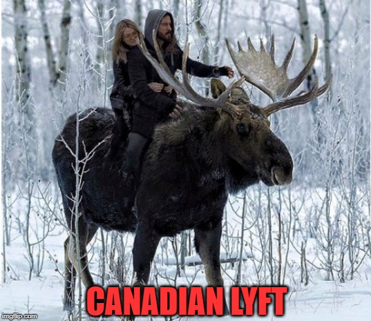 Don't Forget To Tip Your Driver ! | CANADIAN LYFT | image tagged in canadian,lyft,moose,driver,winter | made w/ Imgflip meme maker