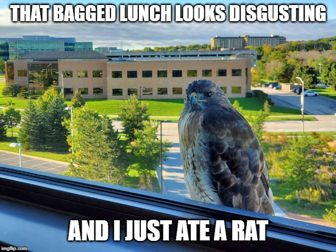 THAT BAGGED LUNCH LOOKS DISGUSTING AND I JUST ATE A RAT | image tagged in hawkboss | made w/ Imgflip meme maker