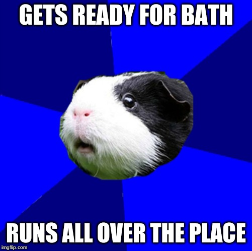 Scumag Guinea Pig | GETS READY FOR BATH RUNS ALL OVER THE PLACE | image tagged in scumbag,guinea pig | made w/ Imgflip meme maker
