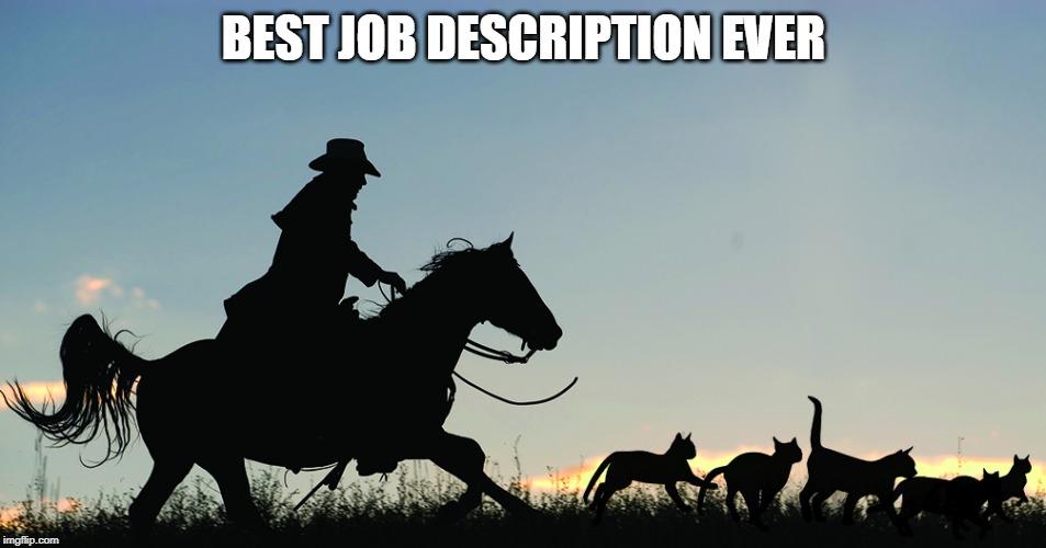 Herding Cats Is My Job Memes Gifs Imgflip