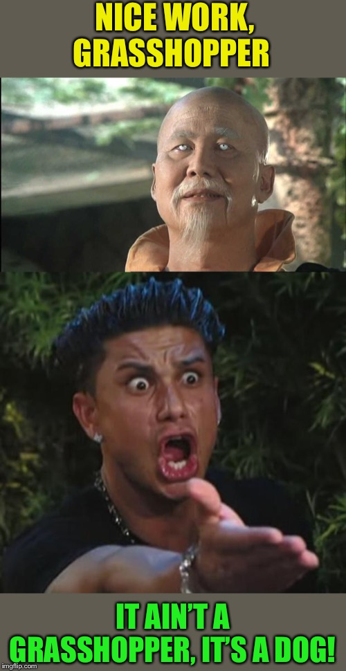 NICE WORK, GRASSHOPPER IT AIN'T A GRASSHOPPER, IT'S A DOG! | image tagged in memes,dj pauly d,kung fu po | made w/ Imgflip meme maker