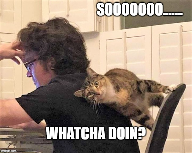 Kitty | SOOOOOOO....... WHATCHA DOIN? | image tagged in cats,computer,pets,kitty | made w/ Imgflip meme maker