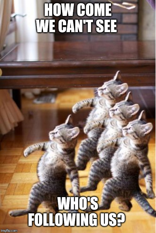 4 cat follow go back | HOW COME WE CAN'T SEE WHO'S FOLLOWING US? | image tagged in 4 cat follow go back | made w/ Imgflip meme maker