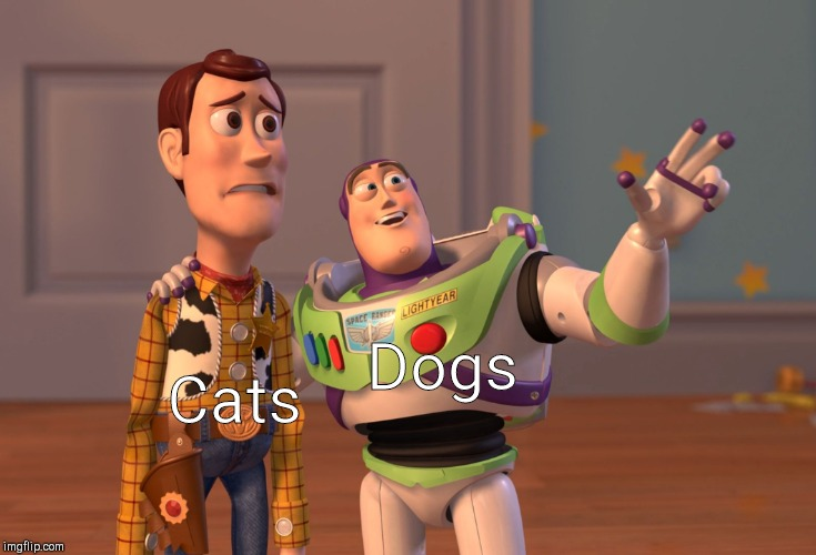 X, X Everywhere Meme | Cats Dogs | image tagged in memes,x x everywhere | made w/ Imgflip meme maker