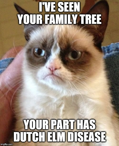 Grumpy Cat | I'VE SEEN YOUR FAMILY TREE YOUR PART HAS DUTCH ELM DISEASE | image tagged in memes,grumpy cat | made w/ Imgflip meme maker
