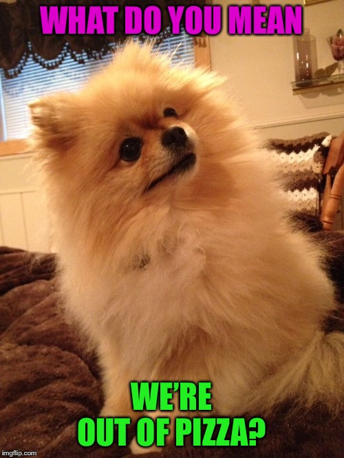 Say It Isn't So | WHAT DO YOU MEAN WE'RE OUT OF PIZZA? | image tagged in puppy,pizza | made w/ Imgflip meme maker