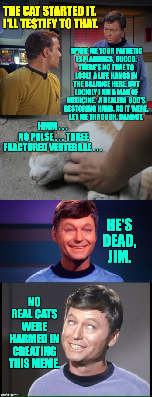 THE CAT STARTED IT.  I'LL TESTIFY TO THAT. HE'S DEAD, JIM. SPARE ME YOUR PATHETIC ESPLAININGS, BUCCO. THERE'S NO TIME TO LOSE!  A LIFE HANGS | image tagged in mccoy and kirk,bad pun mccoy | made w/ Imgflip meme maker