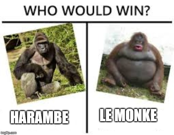 The battle of gods |  HARAMBE; LE MONKE | image tagged in dicksoutforharambe,harambe,le monke | made w/ Imgflip meme maker