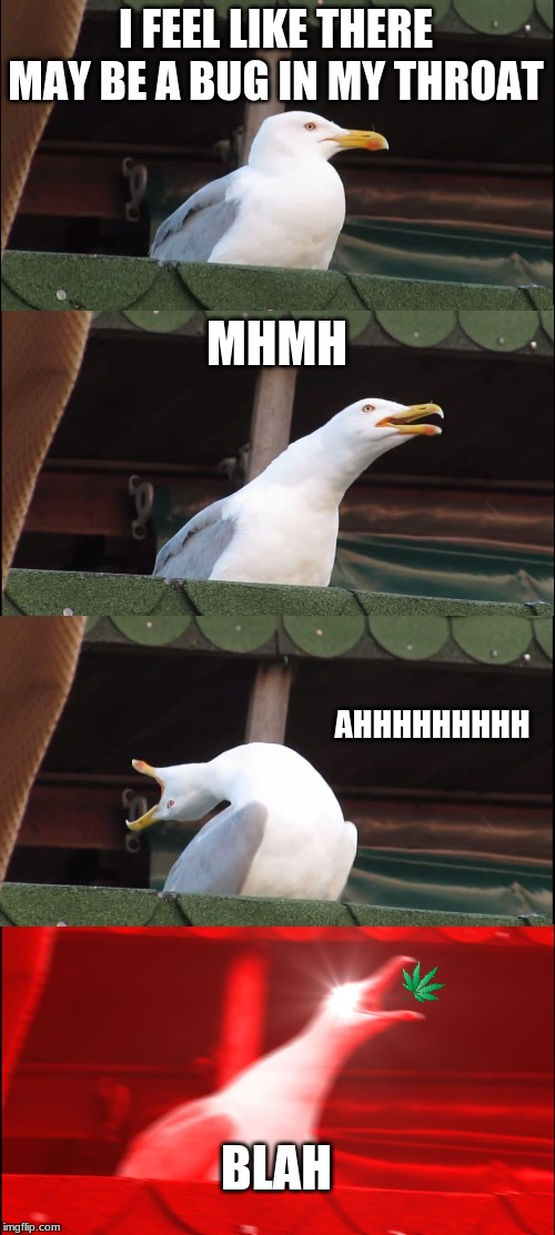 Inhaling Seagull Meme | I FEEL LIKE THERE MAY BE A BUG IN MY THROAT MHMH AHHHHHHHHH BLAH | image tagged in memes,inhaling seagull | made w/ Imgflip meme maker