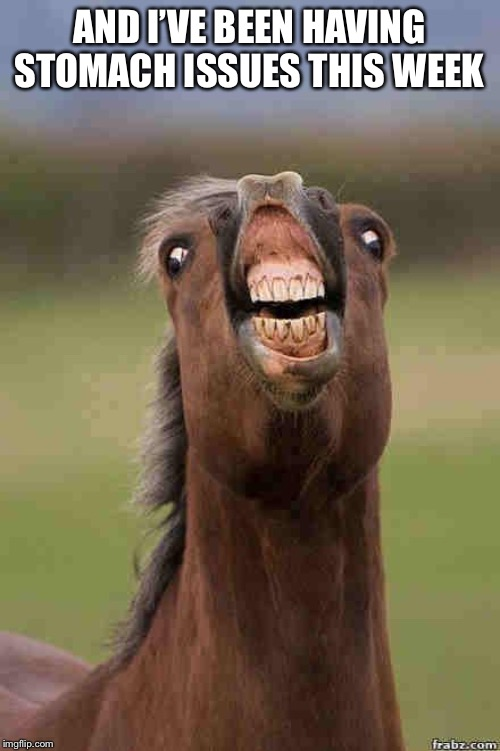 horse face | AND I'VE BEEN HAVING STOMACH ISSUES THIS WEEK | image tagged in horse face | made w/ Imgflip meme maker