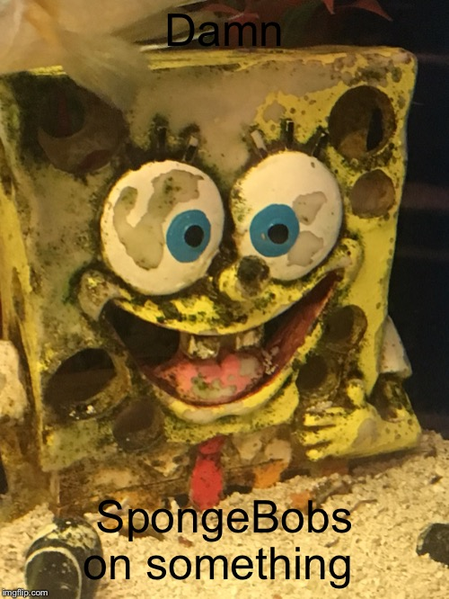 Damn SpongeBobs on something | image tagged in spongebod on crack | made w/ Imgflip meme maker