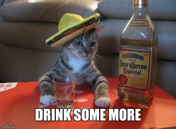 alcohol cat | DRINK SOME MORE | image tagged in alcohol cat | made w/ Imgflip meme maker