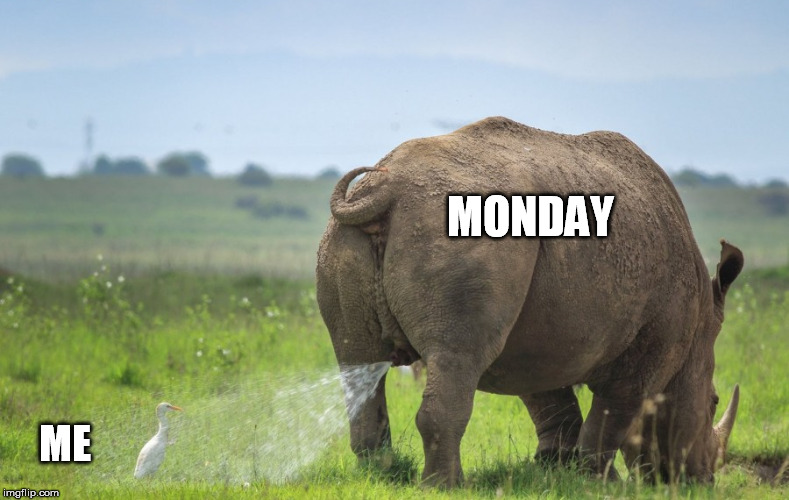 MONDAY ME | image tagged in monday | made w/ Imgflip meme maker