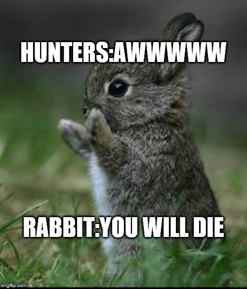 Cute Bunny | HUNTERS:AWWWWW RABBIT:YOU WILL DIE | image tagged in cute bunny | made w/ Imgflip meme maker