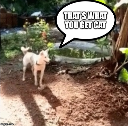 THAT'S WHAT YOU GET CAT | made w/ Imgflip meme maker