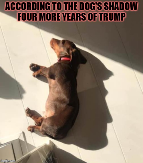 ground dog day | ACCORDING TO THE DOG'S SHADOWFOUR MORE YEARS OF TRUMP | image tagged in shadow,donald trump | made w/ Imgflip meme maker