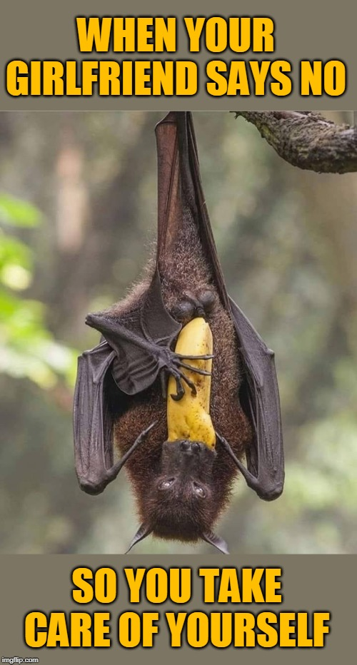 Banana Swallower |  WHEN YOUR GIRLFRIEND SAYS NO; SO YOU TAKE CARE OF YOURSELF | image tagged in memes,bats,banana,bananas,bat,girlfriend | made w/ Imgflip meme maker