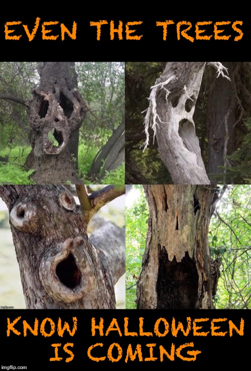 Hollow tree scream | EVEN THE TREES KNOW HALLOWEEN IS COMING | image tagged in haloween,trees,scary,woods,funny memes | made w/ Imgflip meme maker