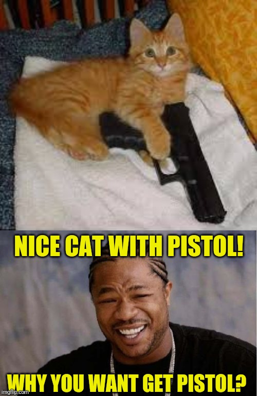 Cat-pistol | NICE CAT WITH PISTOL! WHY YOU WANT GET PISTOL? | image tagged in memes,yo dawg heard you,pistol,cats,funny,wtf | made w/ Imgflip meme maker