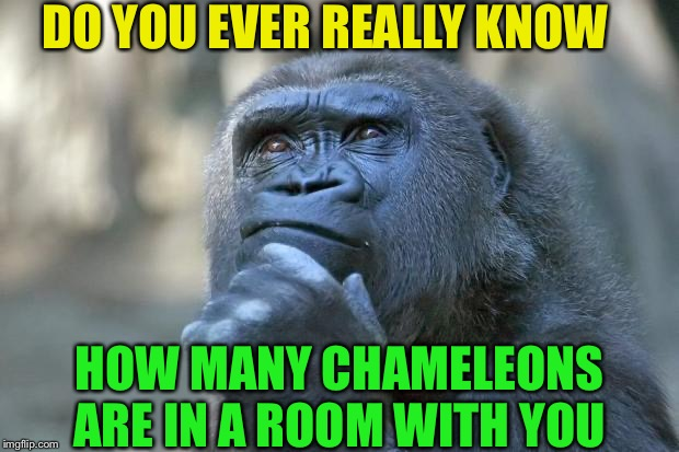 Karma Karma  Karma  Karma Karma... | DO YOU EVER REALLY KNOW HOW MANY CHAMELEONS ARE IN A ROOM WITH YOU | image tagged in that is the question,chameleon,camouflage,scary | made w/ Imgflip meme maker