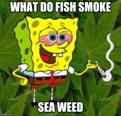 Weed | WHAT DO FISH SMOKE SEA WEED | image tagged in weed | made w/ Imgflip meme maker