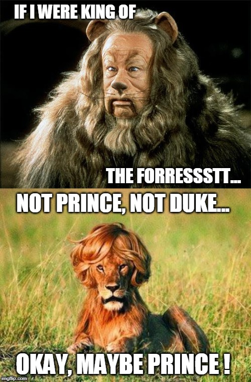 Prince of the Forrest | IF I WERE KING OF THE FORRESSSTT... NOT PRINCE, NOT DUKE... OKAY, MAYBE PRINCE ! | image tagged in funny lion,cowardly lion,funny memes,prince,humor | made w/ Imgflip meme maker
