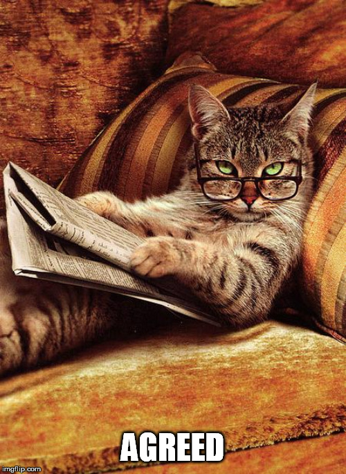 cat reading | AGREED | image tagged in cat reading | made w/ Imgflip meme maker