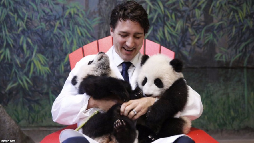 image tagged in trudeau pandas | made w/ Imgflip meme maker