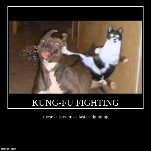 Kung-Fu Cat | those cats were as fast as lightning | KUNG-FU FIGHTING | image tagged in funny,demotivationals | made w/ Imgflip demotivational maker