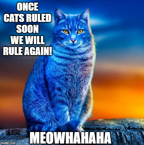 Blue cat | ONCE CATS RULED SOON WE WILL RULE AGAIN! MEOWHAHAHA | image tagged in blue cat | made w/ Imgflip meme maker