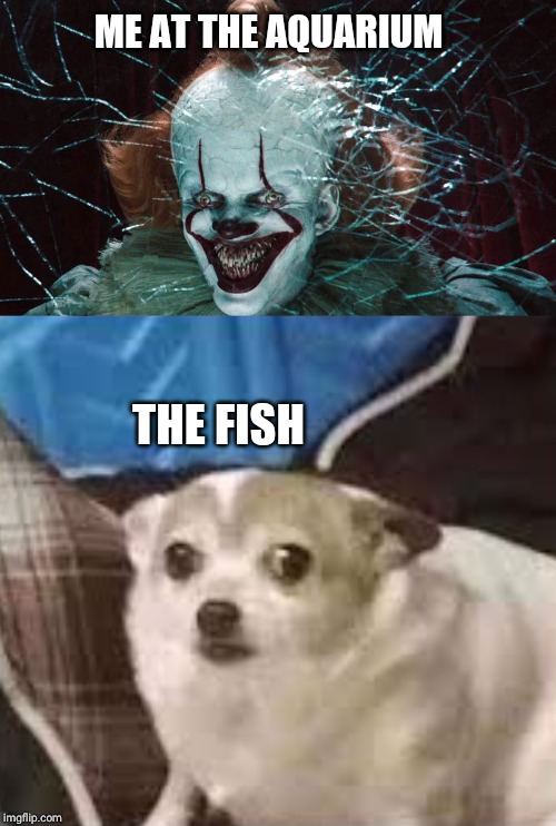 That fish looks cool | ME AT THE AQUARIUM THE FISH | image tagged in memes,pennywise,funny,relatable | made w/ Imgflip meme maker