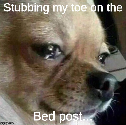 Stubbing my toe on the Bed post... | image tagged in crying chihuahua | made w/ Imgflip meme maker
