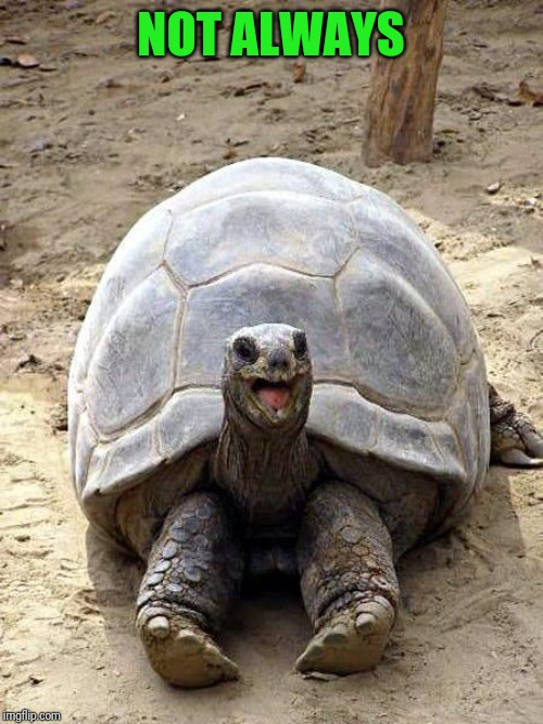 Smiling happy excited tortoise | NOT ALWAYS | image tagged in smiling happy excited tortoise | made w/ Imgflip meme maker